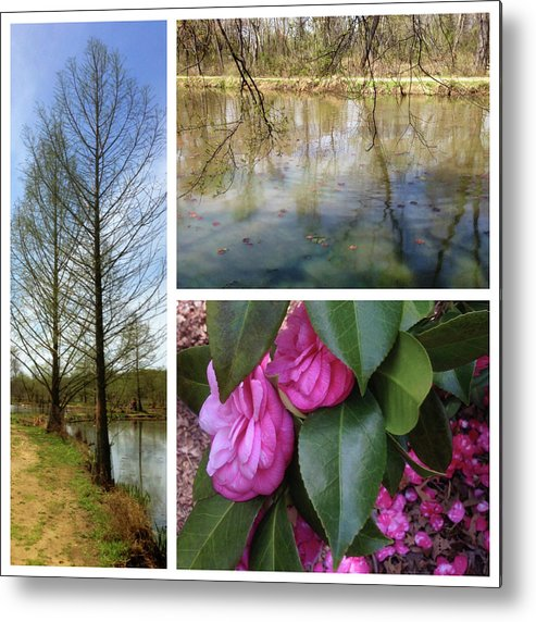 Metal Print featuring the photograph Water Garden Three Views by Iris Posner