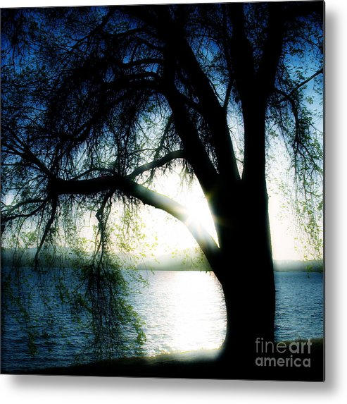 Weesping Metal Print featuring the photograph Weeping by Idaho Scenic Images Linda Lantzy