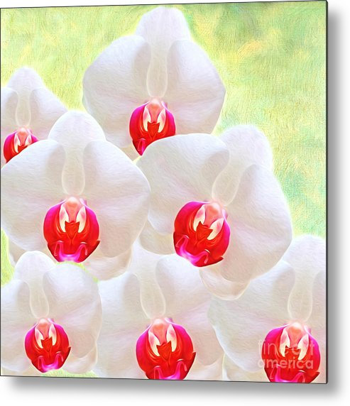 White Orchids Metal Print featuring the photograph White Orchids by Laura D Young