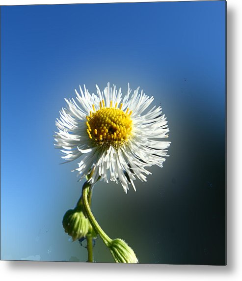 Botanica Metal Print featuring the photograph Wildflower In The Wind 209 by David Houston