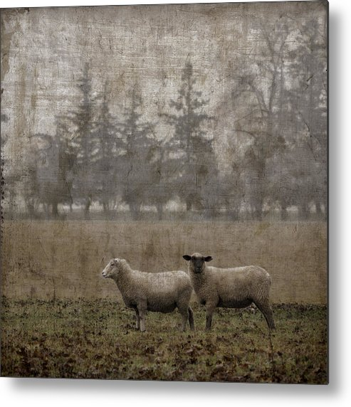 Sheep Metal Print featuring the photograph Willamette Valley Oregon by Carol Leigh