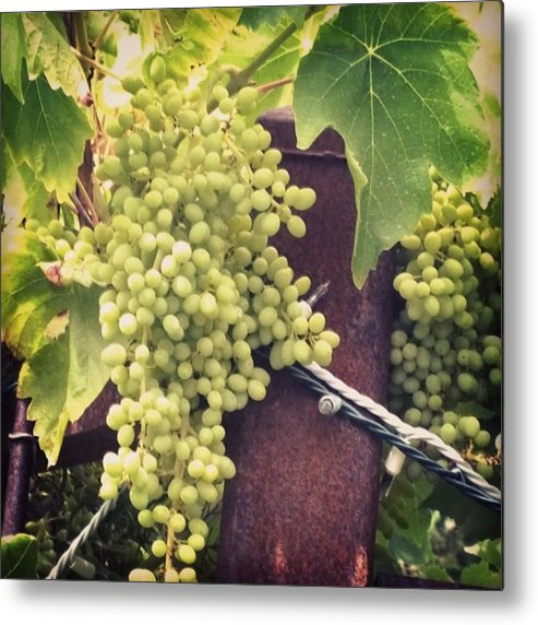 Didisaywine Metal Print featuring the photograph #wine On The #vine . Love These Little by Shari Warren
