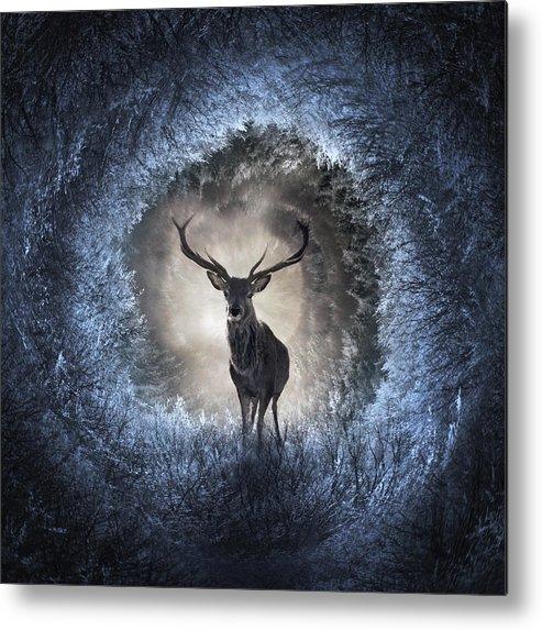 Light Metal Print featuring the digital art Winter by Zoltan Toth