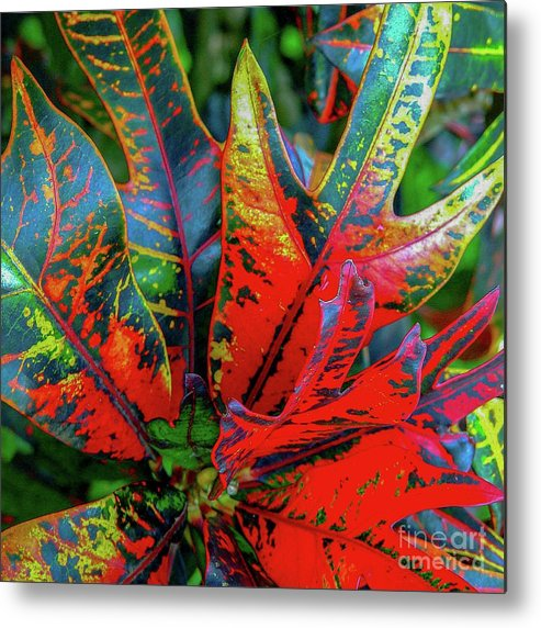 Leaf Metal Print featuring the photograph Plants And Leaves Hawaii by D Davila