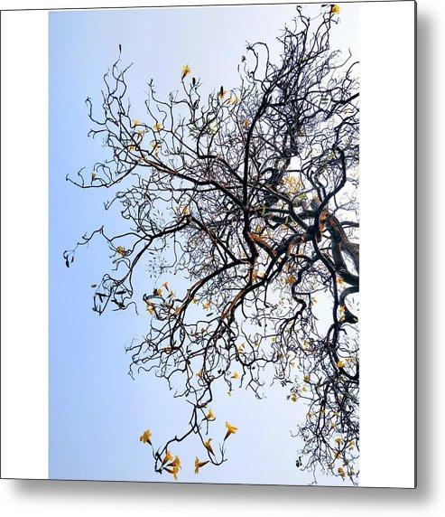 Autumn Metal Print featuring the photograph Autumn by Priya Hazra