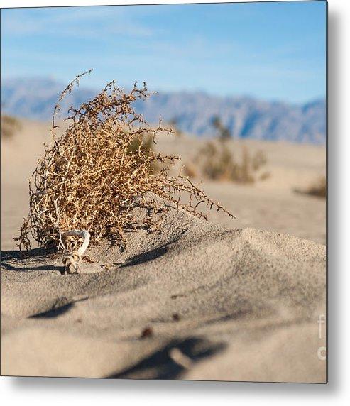 Southwest Metal Print featuring the photograph Dead Sagebrush Lies On Sand In Desert by Kenkistler