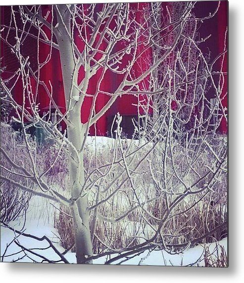 Winter Metal Print featuring the photograph Frost by Johanna Wray