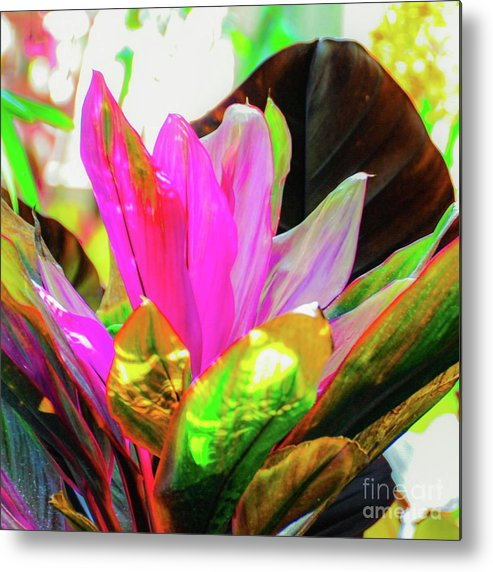Hawaii Metal Print featuring the photograph Tropic Hawaii - Ti Leaf Plant by D Davila