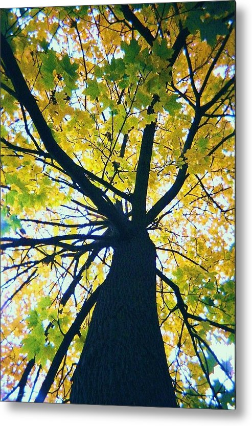 Tree Metal Print featuring the photograph Homage To Georgia O'keefe by Todd Sherlock