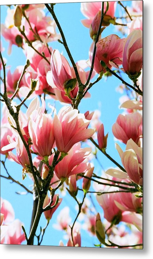 Spring Metal Print featuring the photograph Spring Blossoms by Caroline Clark