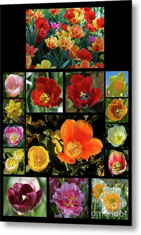 Tulips Metal Print featuring the photograph Spring Flowers 2 by Tim Mulina