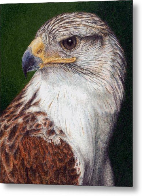 Bird Metal Print featuring the painting Ferruginous Hawk by Pat Erickson