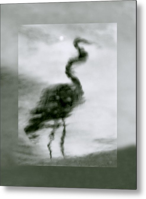 Great Blue Heron Metal Print featuring the photograph Heron De Nacht by Linda McRae