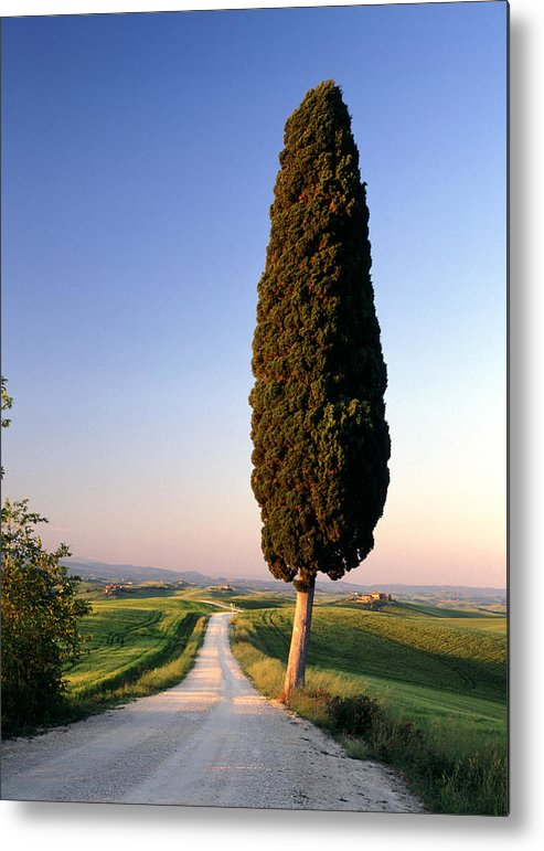 Italy Metal Print featuring the photograph Lone Cypress by Michael Hudson