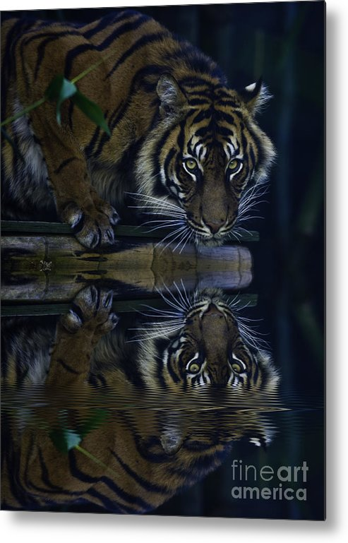 Sumatran Tiger Metal Print featuring the photograph Sumatran Tiger Reflection by Sheila Smart Fine Art Photography