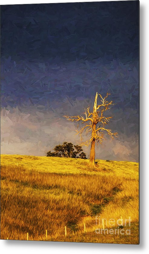 Lone Tree Metal Print featuring the photograph Lone dead tree in paddock by Sheila Smart Fine Art Photography