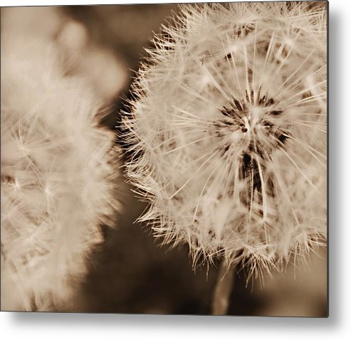 Dandelion Metal Print featuring the photograph Make A Wish by Candice Trimble