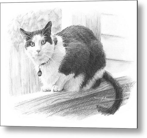 <a Href=http://miketheuer.com Target =_blank>www.miketheuer.com</a> Black White Cat Pencil Portrait Metal Print featuring the drawing Black White Cat Pencil Portrait by Mike Theuer