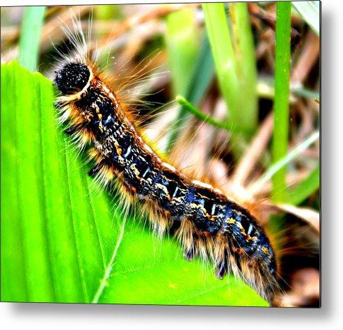 Caterpillar Metal Print featuring the photograph Caterpillar Crawl by Candice Trimble