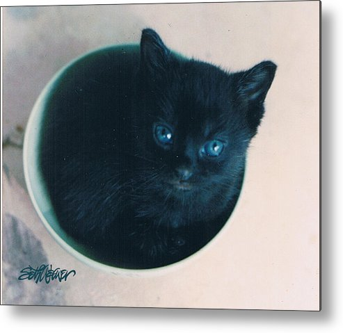 Cat Metal Print featuring the photograph Cup O'Kitty by Seth Weaver