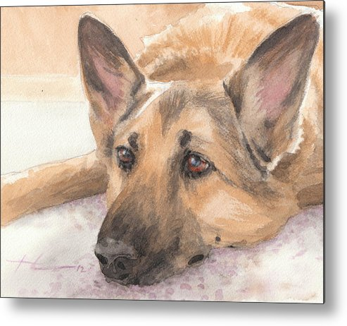 <a Href=http://miketheuer.com Target =_blank>www.miketheuer.com</a> German Shepherd Laying Watercolor Portrait Metal Print featuring the drawing German Shepherd Laying Watercolor Portrait by Mike Theuer