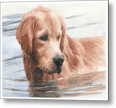 Www.miketheuer.com Setter Dog In Water Watercolor Portrait Metal Print featuring the drawing Setter Dog In Water Watercolor Portrait by Mike Theuer