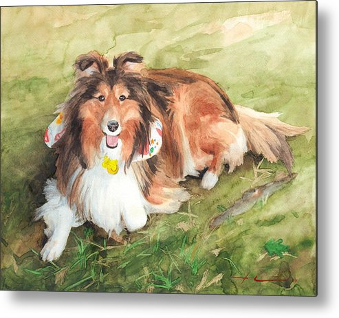 <a Href=http://miketheuer.com Target =_blank>www.miketheuer.com</a> Sheltie On Lawn Watercolor Portrait Metal Print featuring the drawing Sheltie On Lawn Watercolor Portrait by Mike Theuer
