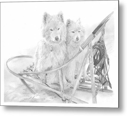 <a Href=http://miketheuer.com Target =_blank>www.miketheuer.com</a> Sled Dogs Riding In Sled Pencil Portrait Metal Print featuring the drawing Sled Dogs Riding In Sled Pencil Portrait by Mike Theuer