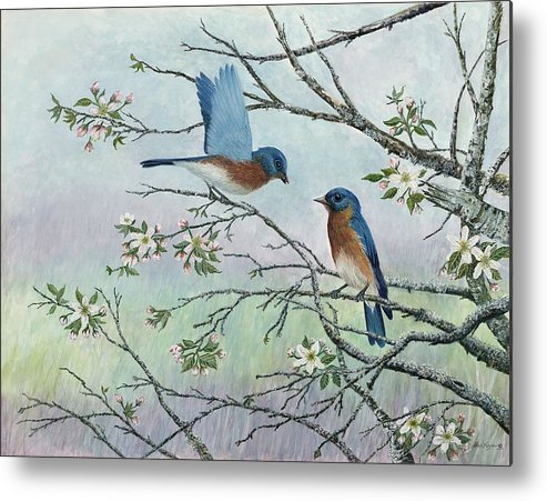 Bluebirds; Trees; Wildlife Metal Print featuring the painting The Gift by Ben Kiger