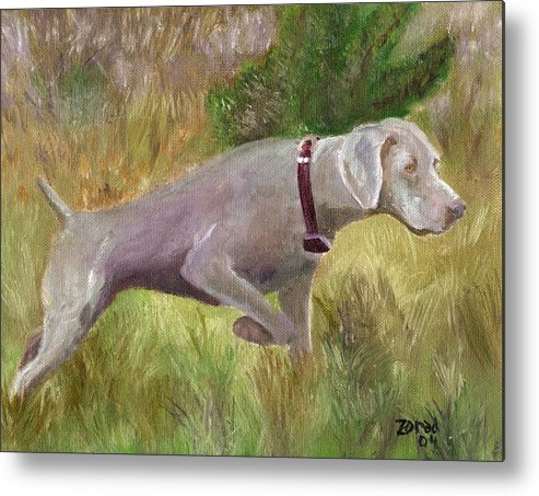 Weimaraner Dog Painting Metal Print featuring the painting Weimaraner Point by Mary Jo Zorad