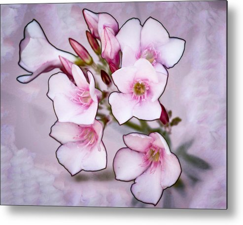 Flowers Metal Print featuring the photograph Oleander Blossoms by Jim Painter
