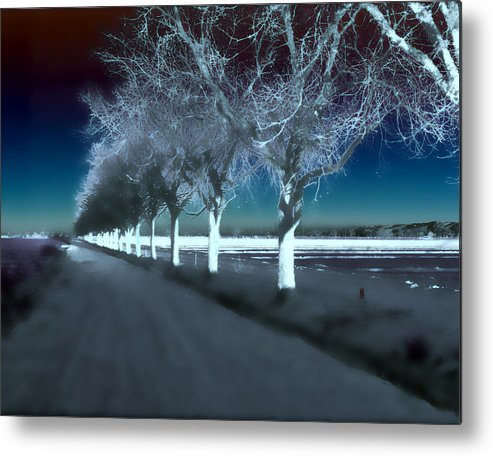 Trees Metal Print featuring the photograph Pecan Trees by Jim Painter