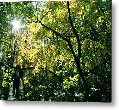 Under A Golden Canopy Metal Print featuring the photograph Under a Golden Canopy by Seth Weaver