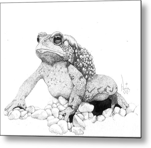 Toad Art Toads Reptile Artist Toad Stool Toader American Spadefoot Metal Print featuring the drawing Bufo Americanus by Preston Shupp