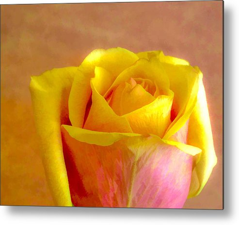 Flower Metal Print featuring the photograph A Single Rose by Ches Black