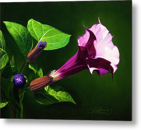 Floral Metal Print featuring the painting Anastacias Datura by Gary Hernandez