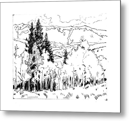 Aspens Metal Print featuring the drawing Aspens Against the Evergreens by John Lautermilch