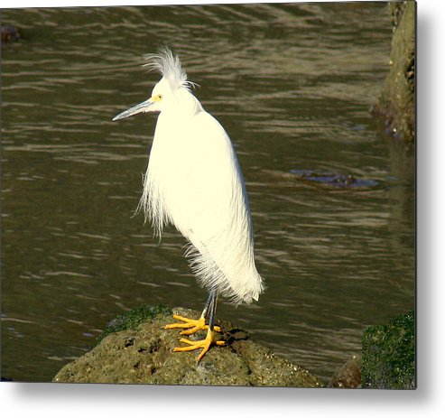 Nature Metal Print featuring the photograph Bad Hair Day by Kerry Reed