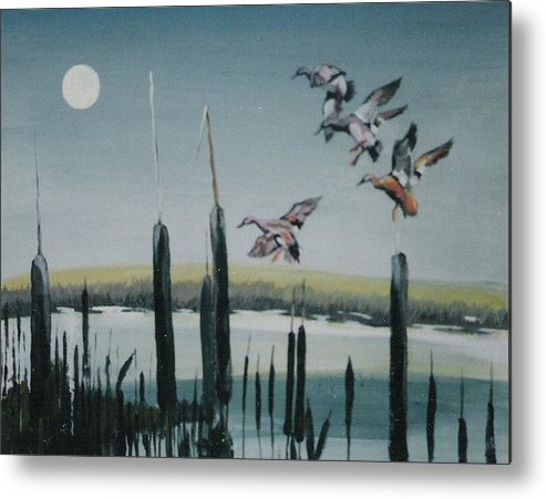 Wildfowl Metal Print featuring the painting Commin in by Barry Smith