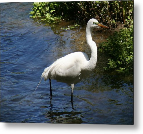 Crain Metal Print featuring the photograph Down By The River by Kerry Reed