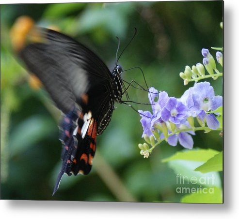 Butterfly Metal Print featuring the photograph Flying In close up by Shelley Jones