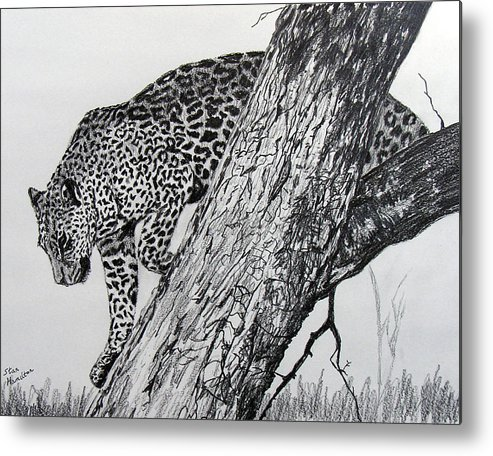 Original Drawing Metal Print featuring the drawing Jaquar In Tree by Stan Hamilton