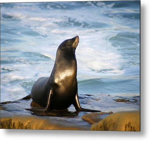 Sealion Metal Print featuring the photograph Sealion by Anthony Jones