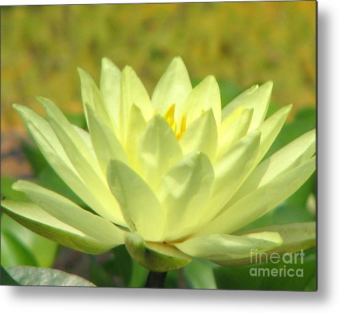 Lillypad Metal Print featuring the photograph Shades by Amanda Barcon