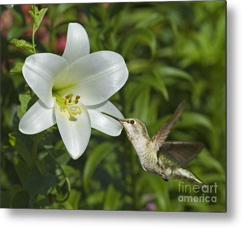 Floral Metal Print featuring the photograph Spring Fling by Chuck Brittenham