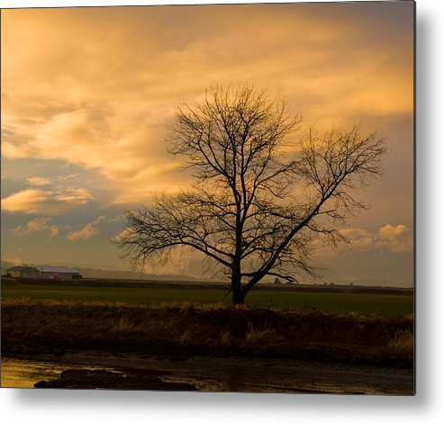 Photography Metal Print featuring the photograph Standing Alone by Joel Brady-Power