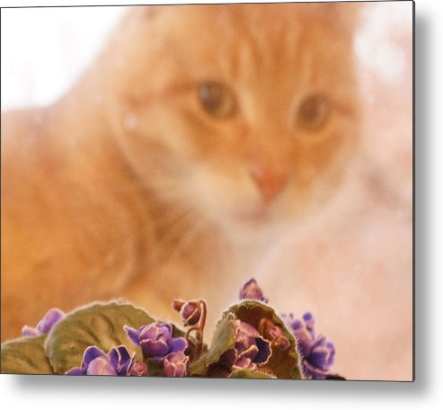 Orange Tabby Cat Metal Print featuring the digital art Violets with Cat by Jana Russon