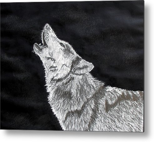 Pencil Metal Print featuring the drawing Wolf Howl by Stan Hamilton
