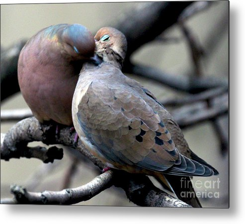 Female Mourning Dove Metal Print featuring the photograph Cooing Mourning Doves 2 by Patricia Youngquist