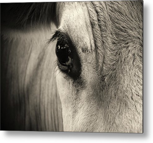 Horse Metal Print featuring the photograph Horse Eye by Karena Goldfinch